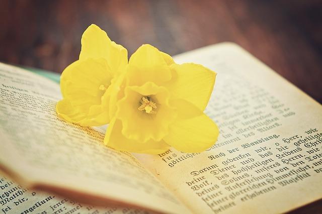book-741942_640